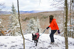 LP Snowy Henrys Woods